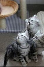 The Secret Life Of Kittens: Season 1