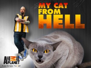 My Cat From Hell: Season 9