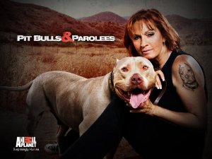Pit Bulls And Parolees: Season 9
