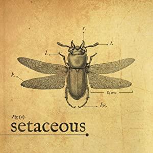 Setaceous