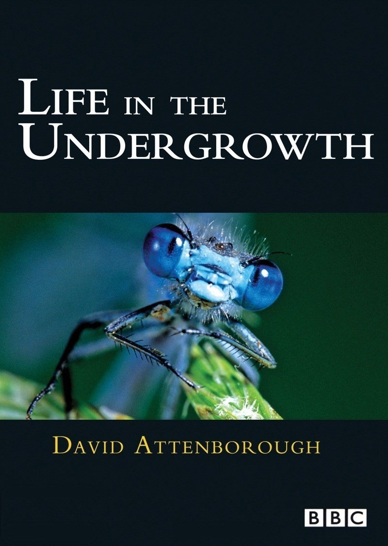 Life In The Undergrowth: Season 1