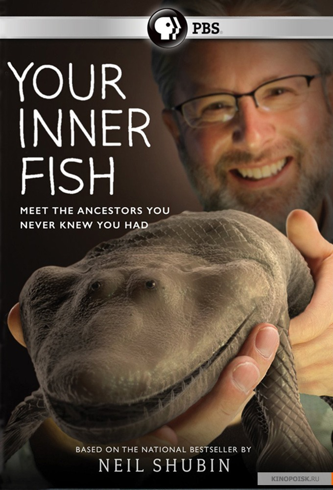 Your Inner Fish: Season 1