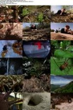 National Geographic Wild - City Of Ants