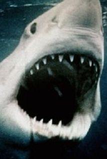 Sharkmania: The Top 15 Biggest Baddest Bloodiest Bites