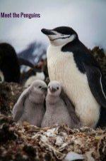 Meet The Penguins 2015