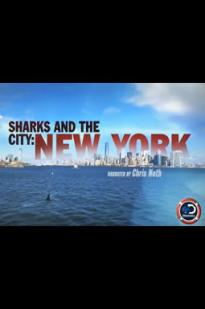 Sharks And The City: New York