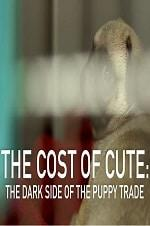The Cost Of Cute: The Dark Side Of The Puppy Trade